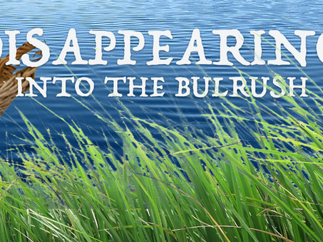 Disappearing Into The Bulrush