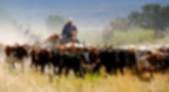farmer_long.jpg