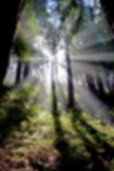 California-PacificCoastHighway-Hike-Tree