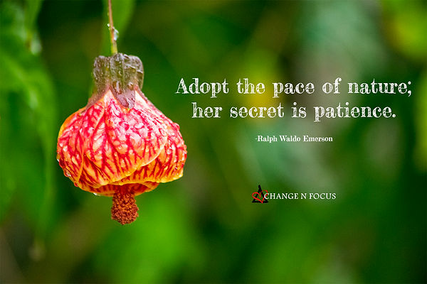 nature-inspiration-quote-paceofnature-pa