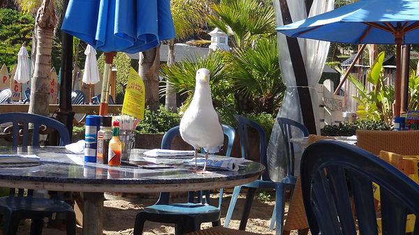 California-ParadiseCoveCafe-Malibu.jpg