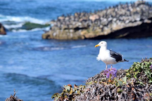 California-SanDiego-LaJolla-0390.jpg