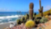 California-SanDiego-Encinitas-Swamis-Med