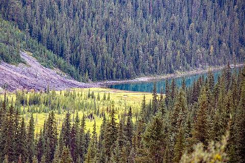 Canada-CavellLake-Jasper-Alberta-0326.jp