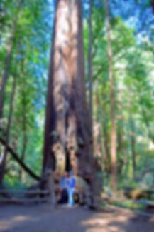 SanFrancisco-MuirWoods-Redwoods-Californ