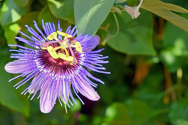 California-SantaBarbaraMission-Floral-09