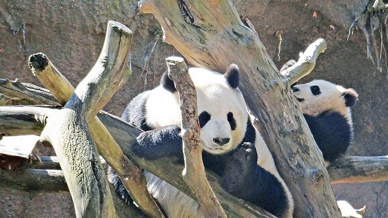 California-SanDiego-Zoo-2989.jpg
