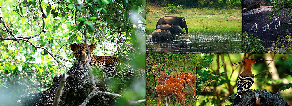 animals of yala national park