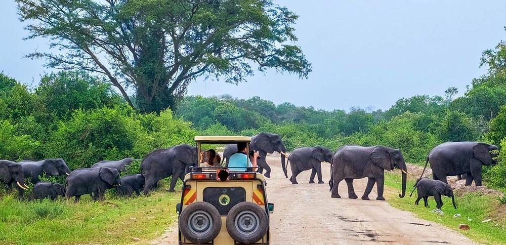 yala Safari park in srilanka