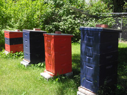Some of our hives