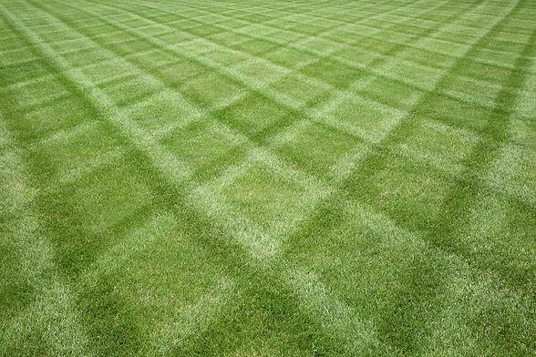 Manicured lawn professionally cut in a diamond pattern.jpg