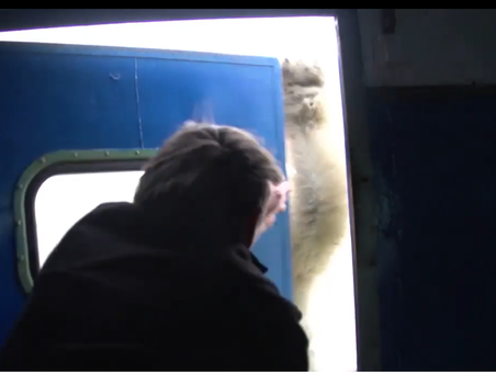 Медведь-хулиган (видео)