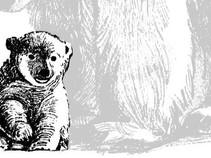 Медвежата-сироты - как спасать?