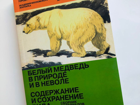 Белый медведь в природе и в неволе