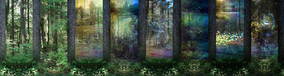 In a dark wood, still 2