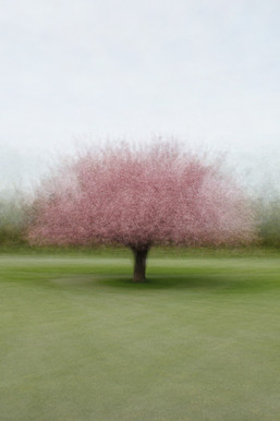 Primaries - Cherry Blossom
