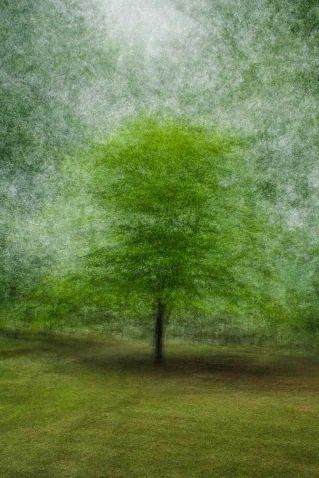 Primaries - Flowering Dogwood