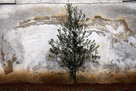 The Walls #42