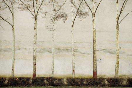 The Walls #44