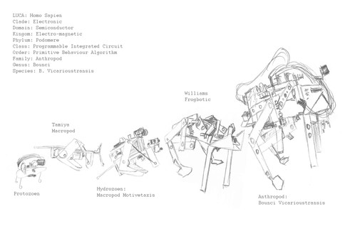 Field Studies: Biped Evolutionary Diagram