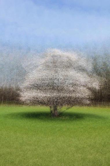 Primaries - Magnolia