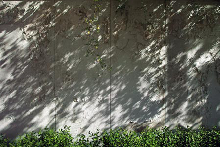 The Walls #58