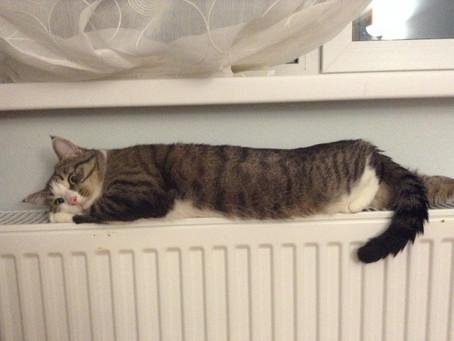 АО «ЭнергосбыТ Плюс» понизит температуру отопления в десятках домов и зданий Орджоникидзевского райо