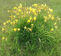 Flowers at Terra Kula Eco Education Site