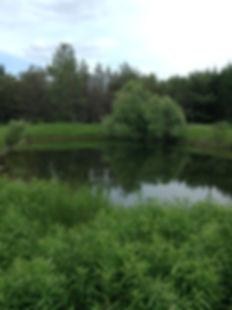 Secnd pond at Terra Kula Eco-Education Site