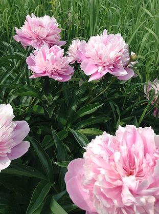 Blooms at Terra Kula Eco-Education Site