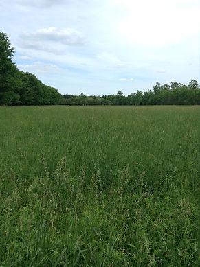 Field at Terra Kula Eco-Education Site
