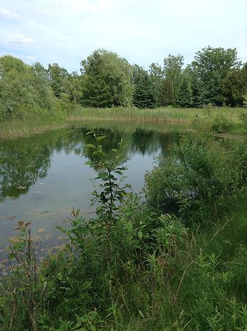 Large Pond at Terra Kula Eco-Education Site