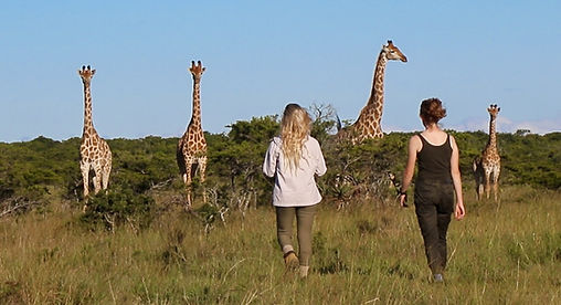 Guests on a Safari Walk