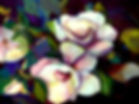 Sorrentino MAGNOLIA 2226x1666.JPG