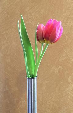 Lazar_floral_Tulip.jpg