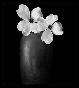 Everds Floral.jpg