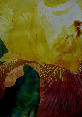 Kingery_floral_Lyon-Iris-WC-150dpi.jpg
