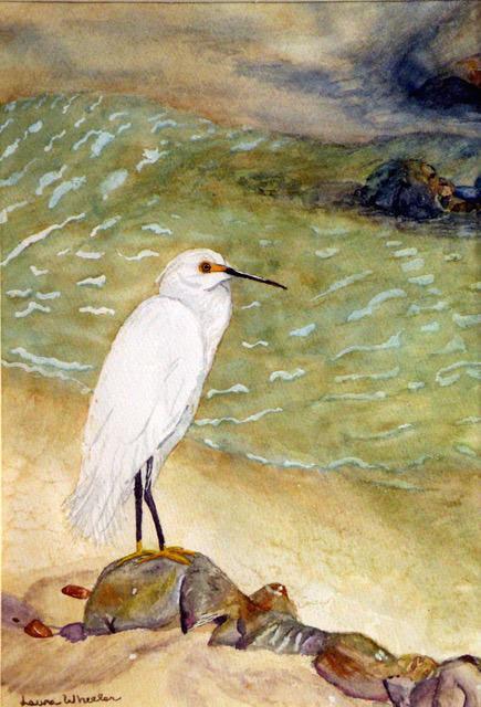 Wheeler Snowy egret.jpg