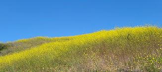 Caulfield_Landscape.jpg