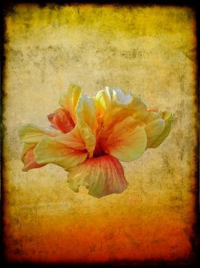 Valois-floral_Hibiscus.jpg