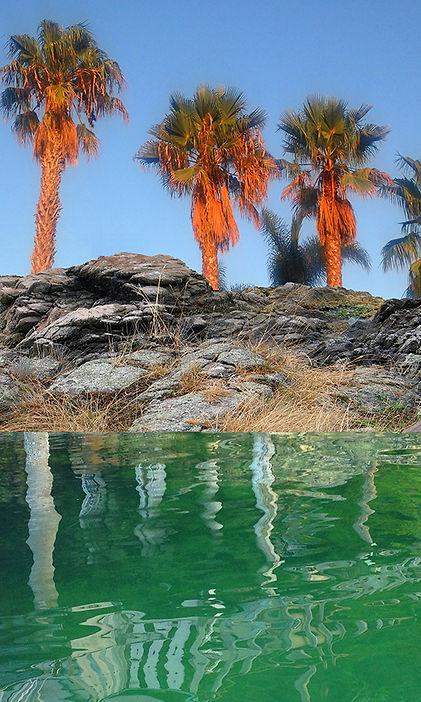 Howlett-Orange_Palms-for-web.jpg