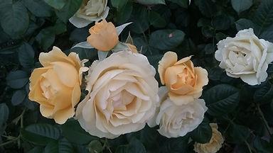 Caulfied Florals.jpg