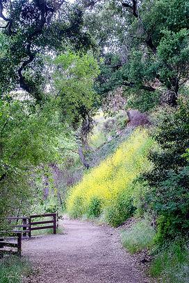 Moeller_greenery_Mustard Plants Under the Oak Trees.jpg