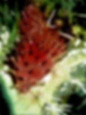 Kingery Prickly Baby.jpg