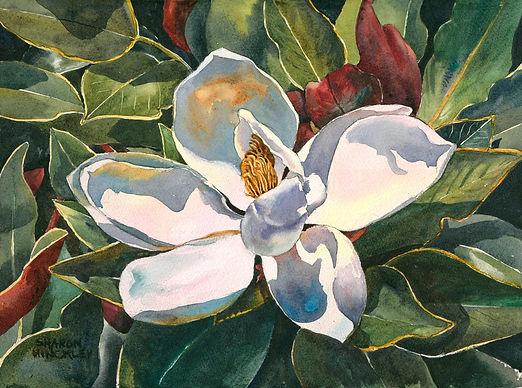 Hinckley Magnolia Blossom 20x24 wc $497.