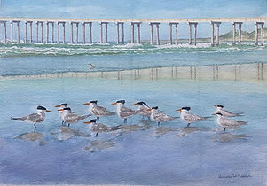 Wheeler_Elegant Tern Convention wc 20x14