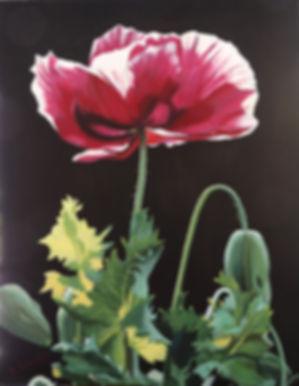 Schmidt_Oriental Poppy.jpg
