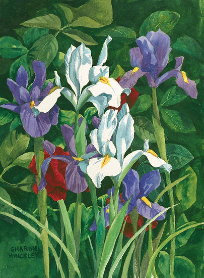 Hinckley Signing Flowers 22 x 28 wc $497