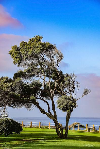 Moeller - Tree Just After Sunrise at La