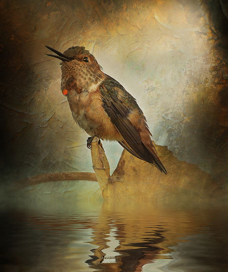 Brock_Humming Bird by Beverly Brock.jpg